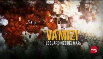 Por el Planeta: 'Vamizi, los jardines del mar'