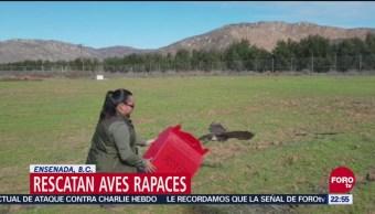Rescatan Y Reintegran A Aves Rapaces En Ensenada, Baja California, Rescatan Y Reintegran A Aves Rapaces, Ensenada, Baja California, Profepa