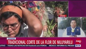 Tradicional Corte De La Flor De Niluyarilu En Chiapas, Flor De Niluyarilu, Chiapas, Municipio De Chiapa De Corzo, Nacimiento Del Niño Dios