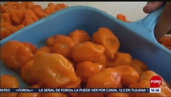 Utilizan Chile Habanero Preparar Postres Campeche