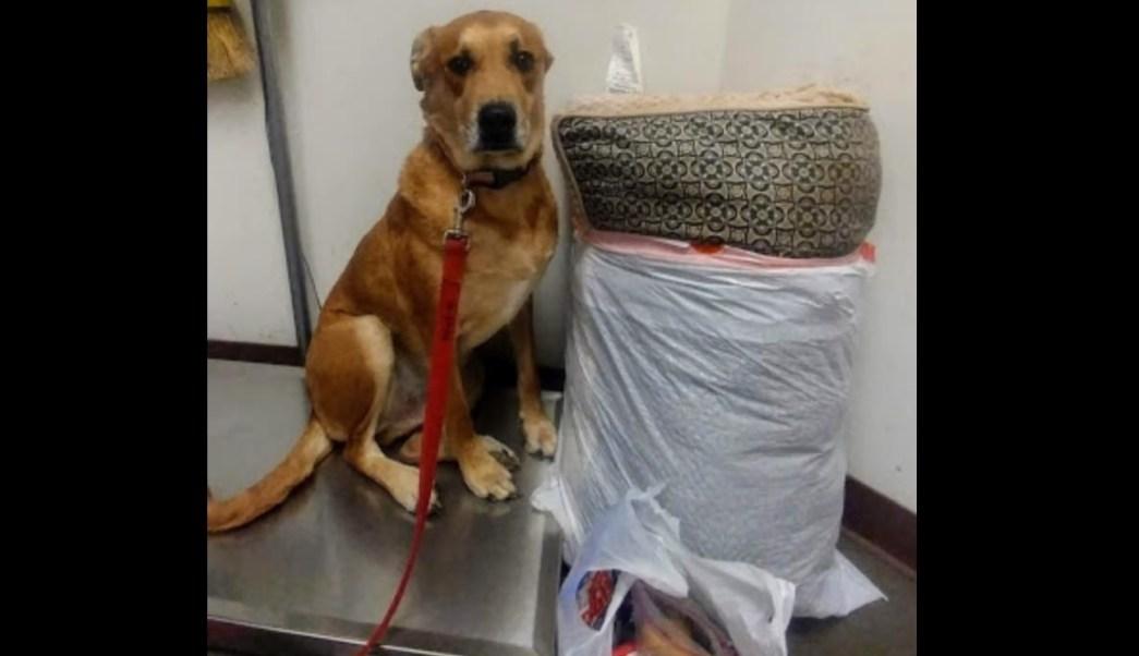 El abandono de  Wall-E , el perro que regresaron con todas sus cosas al  albergue donde ... d79abc280f
