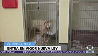 Tiendas de mascotas en California solo venderán animales rescatados