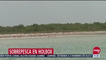 Actividad humana afecta ecosistema en Isla Holbox