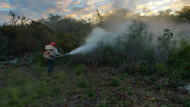 Foto: combate plaga de langosta en Campeche, 28 de enero 2019. (Twitter @UCSCampeche)