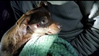 Despiden a policía que disparó a un perro chihuahua