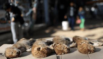 Leones recién nacidos mueren de frío en zoológico de Gaza