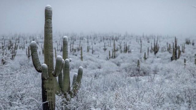 Foto: heladas en Sonora, ocurridas en diciembre 2018