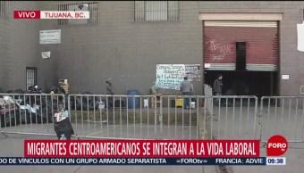 Migrantes centroamericanos se integran a la vida laboral