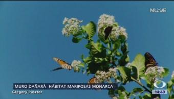 Muro fronterizo afectará santuario de la mariposa monarca en Texas