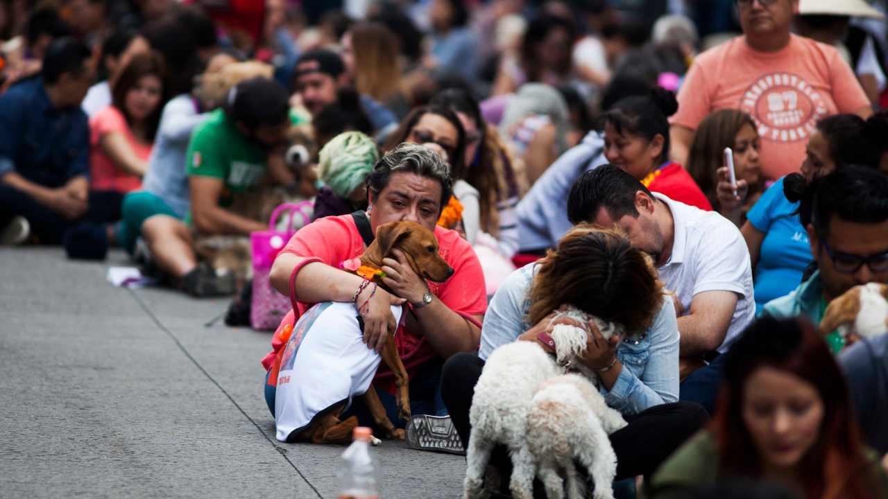 perros-raza-mexicanos-favorita-mestizo-chihuahua-pug