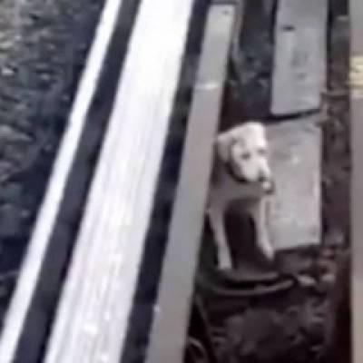 Rescatan a perrito atrapado en las vías de Línea B del Metro