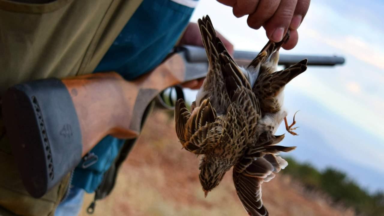 foto colombia prohibe caza animales 7 febrero 2019