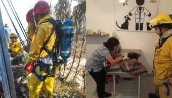 Bomberos Rescatan Perrito Atrapado En Pozo Navojoa Sonora, Bomberos Rescatan, Navojoa Sonora, Navojoa, Sonora, Bomberos,