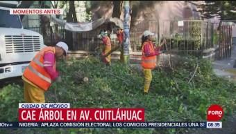FOTO: Cae árbol en avenida Cuitláhuac, 16 febrero 2019
