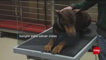 FOTO: Crean primer banco de sangre para perros en México, 10 febrero 2019