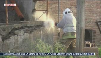 Foto: Denuncian aumento de enjambres de abejas en Sonora