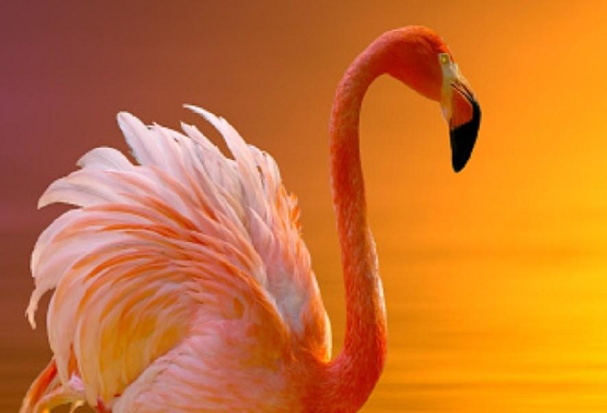 Drones, aliados en la preservación del flamingo rosado en Yucatán