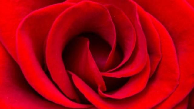 Así se forman los colores de las flores