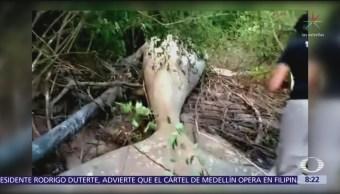 Hallan cadáver de ballena jorobada en Amazonas