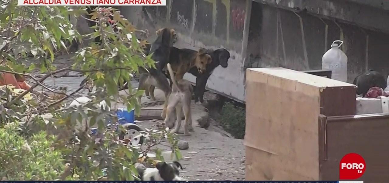 Jauría de más de 20 perros ronda avenida Gran Canal, CDMX