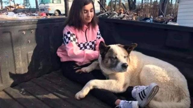 Kingston, el perro sobreviviente que se reunió con su familia 101 días después del devastador incendio de California