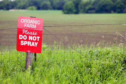 Las granjas orgánicas no suelen utilizar los pesticidas más comunes, aunque es posible que utilicen otros químicos que son supuestamente 'menos tóxicos' (GettyImages)