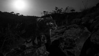 foto leopardo negro kenia 5