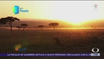 Masai Mara: La gran migración