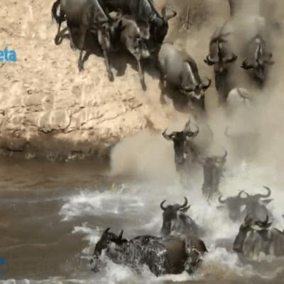 Masái Mara, la gran migración en África