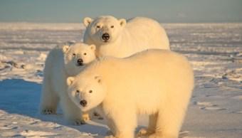 Foto: Efectos del cambio climático en áreas polares obliga a que osos busquen alimentos más allá de su hábitat, dicen expertos, Rusia, febrero 9 de 2019 (Getty Images)