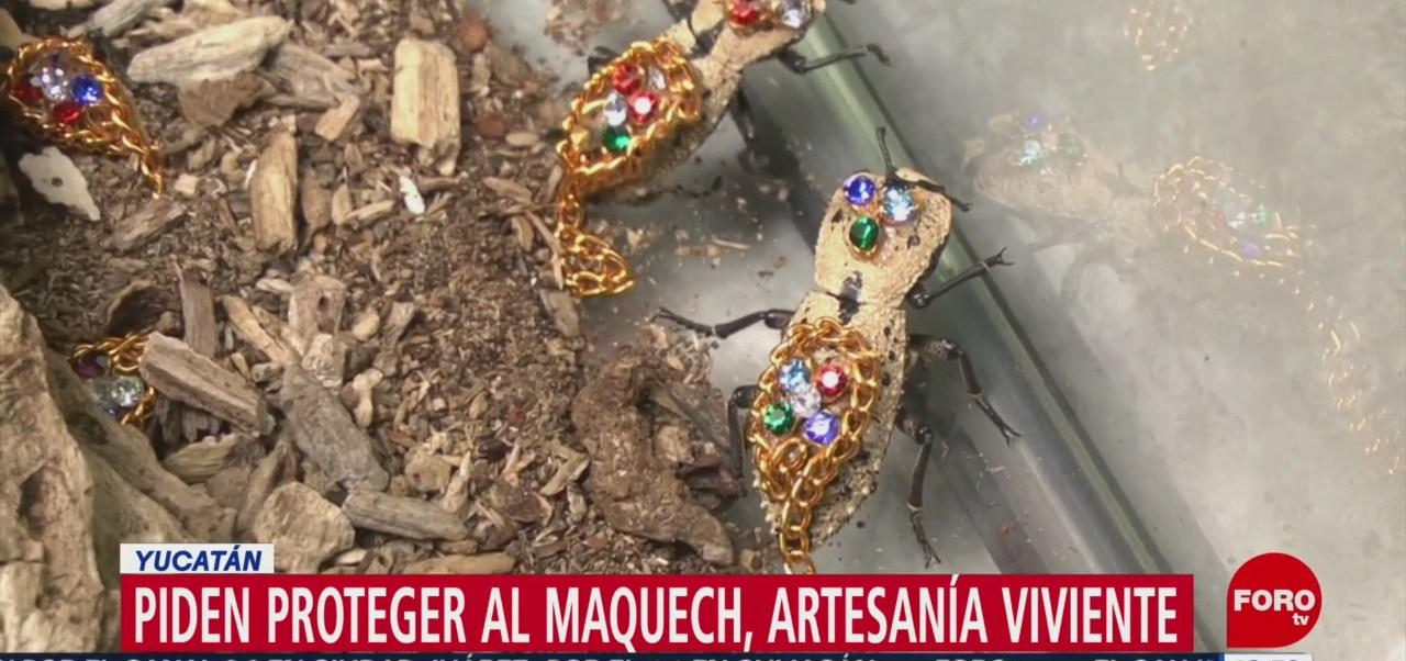 Piden protección para el escarabajo maquech
