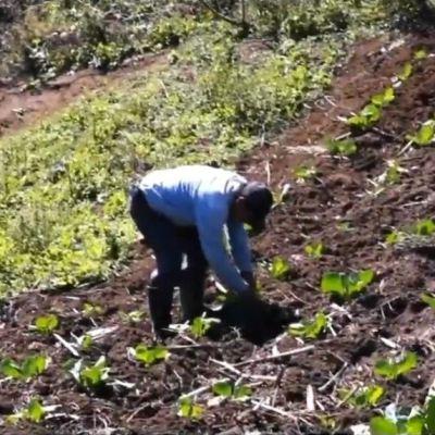 Gobierno federal pagará 5 mil pesos mensuales a campesinos