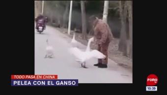 Todo Pasa En China: Pelea con el ganso