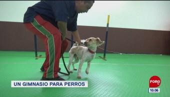 Un gimnasio para perros