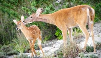 Foto: Jauría mata a ocho venados en Zoológico de Chiapas, 26 de febrero 2019. (Getty Images)