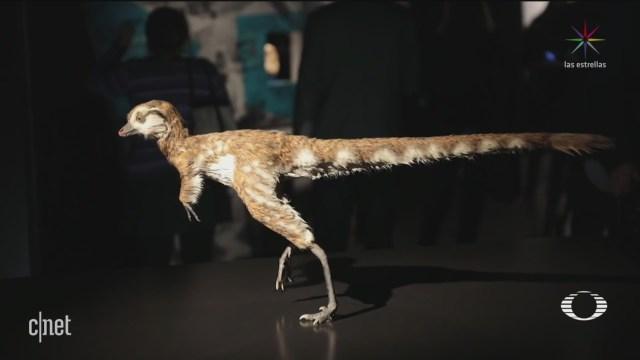 Foto: Verdadero Tiranosaurio Rex 12 de Marzo 2019
