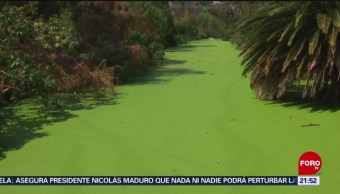 Foto: Buscan Rescatar Canal Nacional CDMX 5 de Marzo 2019