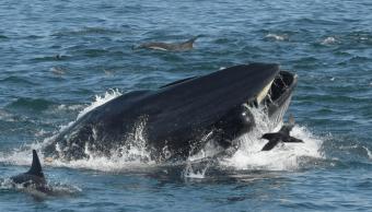 Foto: El buzo Rainer Schimpf en la boca de una ballena en Sudáfrica, marzo 2019