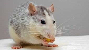 Ratones con nanotecnología adquieren visión infrarroja