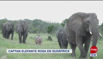 FOTO:Extra, Extra: Captan elefante rosa en Sudáfrica, 18 marzo 2019