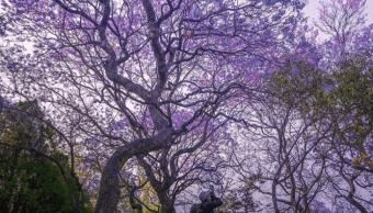 Pro Bosque convoca a que le regalemos árboles a Chapultepec
