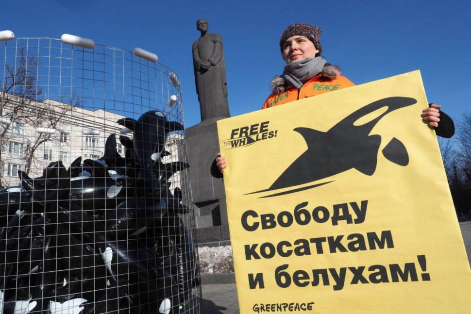FOTO Leonardo DiCaprio expone a Rusia por cárcel de ballenas; Greenpeace organizó una protesta en Moscú  Greenpeace Rusia marzo 2019 moscu
