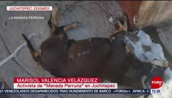FOTO: Acusan a municipio de Juchitepec de envenenar a decenas de perros