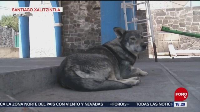 Foto: Cómo proteger a las mascotas durante una erupción