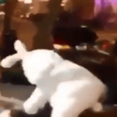 Conejo de Pascua defiende a golpes a mujer agredida en Florida