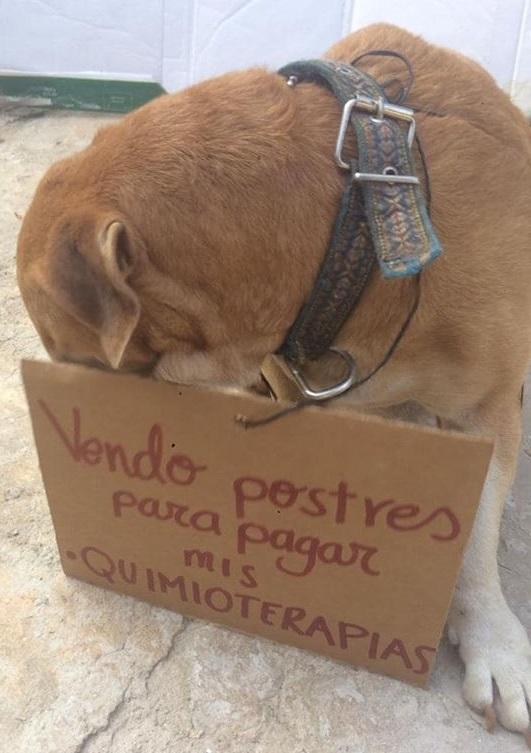 foto deko perro vende postres 3