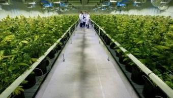 Foto: Médicos investigan los efectos adversos de la marihuana y el tabaco para la salud, abril 7 de 2019 (Twitter: @nationalpost)