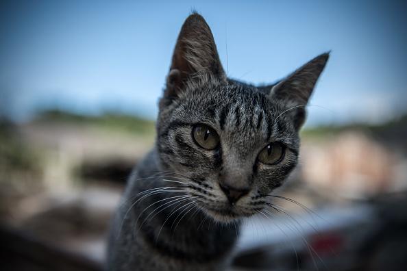 Escuelas para gatos ya son una realidad en México