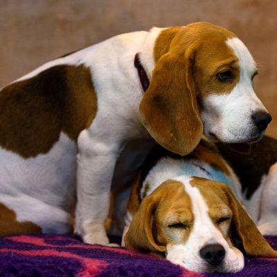 ¡Guau! Los perros son capaces de detectar el cáncer
