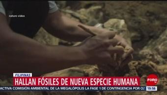 Foto: Fósiles Nueva Especie Humana Filipinas 10 de Abril 2019